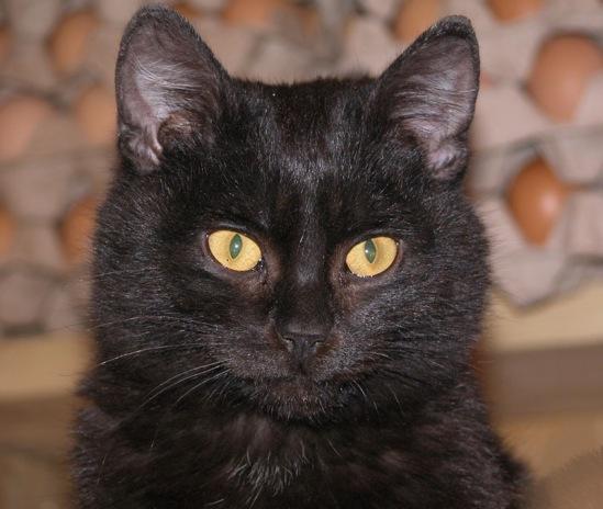 Про кошек - Страница 3 114108--29491339-m549x500-u54476