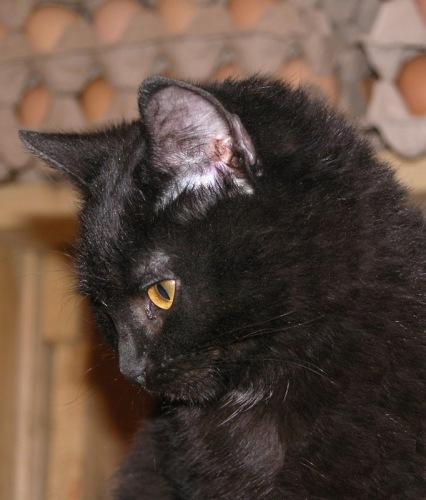 Про кошек - Страница 3 114108--29491352-m549x500-u54537