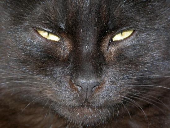 Про кошек - Страница 3 114108--30326667-m549x500-ue445a