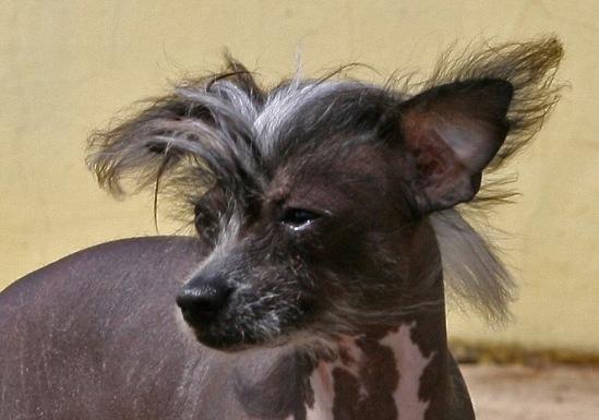 Собачий портрет 114108--32187180-m549x500-u68c71