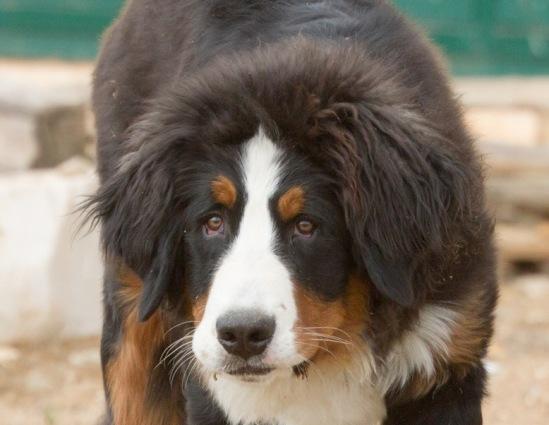 Собачий портрет - Страница 6 114108--43640305-m549x500-ua20a3