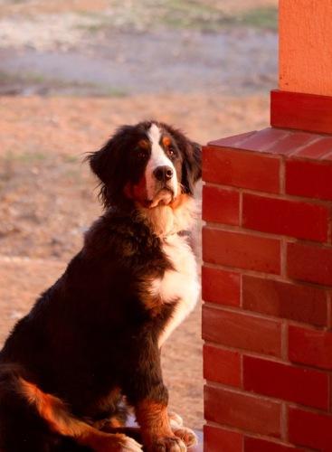 Собачий портрет - Страница 6 114108--43651407-m549x500-u51ca7