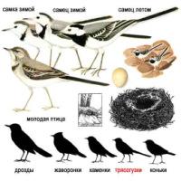 Эту птицу Союз охраны птиц России выбрал в качестве живого символа 2011...