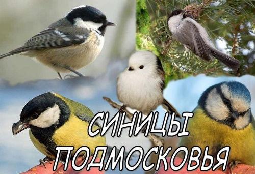 """,""www.diary.ru"