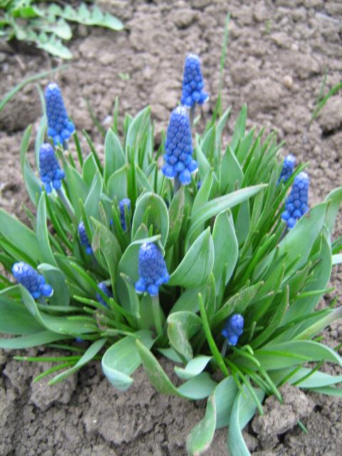 Какие цветы вы будете в этом году высевать семенами?