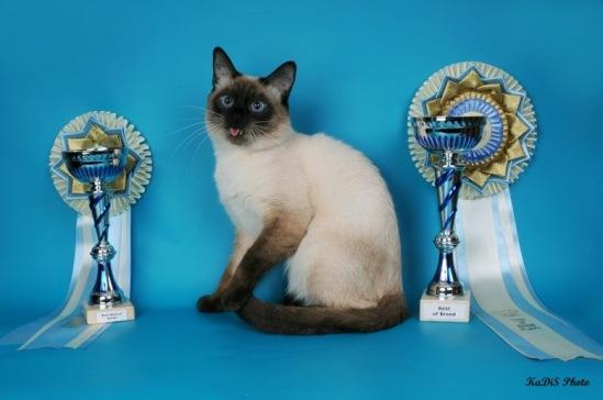 Победители международной выставки кошек памяти Людмилы Есиной, 30-31 января 2010 года, Москва, WCF.