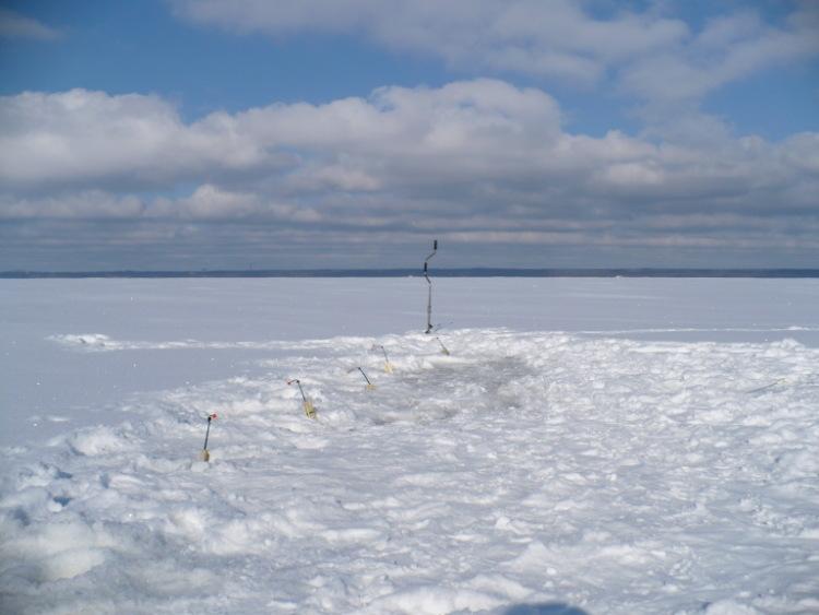 7 марта 2010 г. Комарово. 63542-35cff-29588231-m750x740