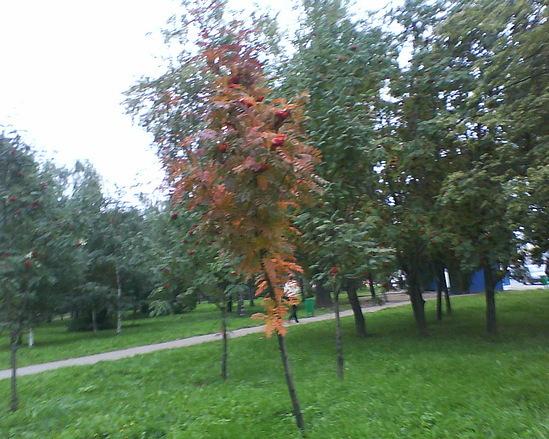 Gallery.ru / Фото #18 - Парки и скверы - NOLGA.