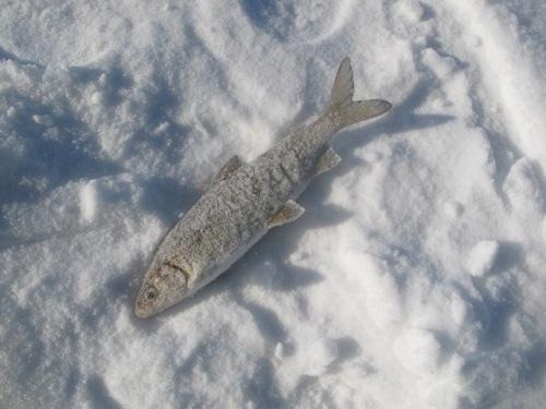 рыбалка на севере форум 2016 сухое море сегодня